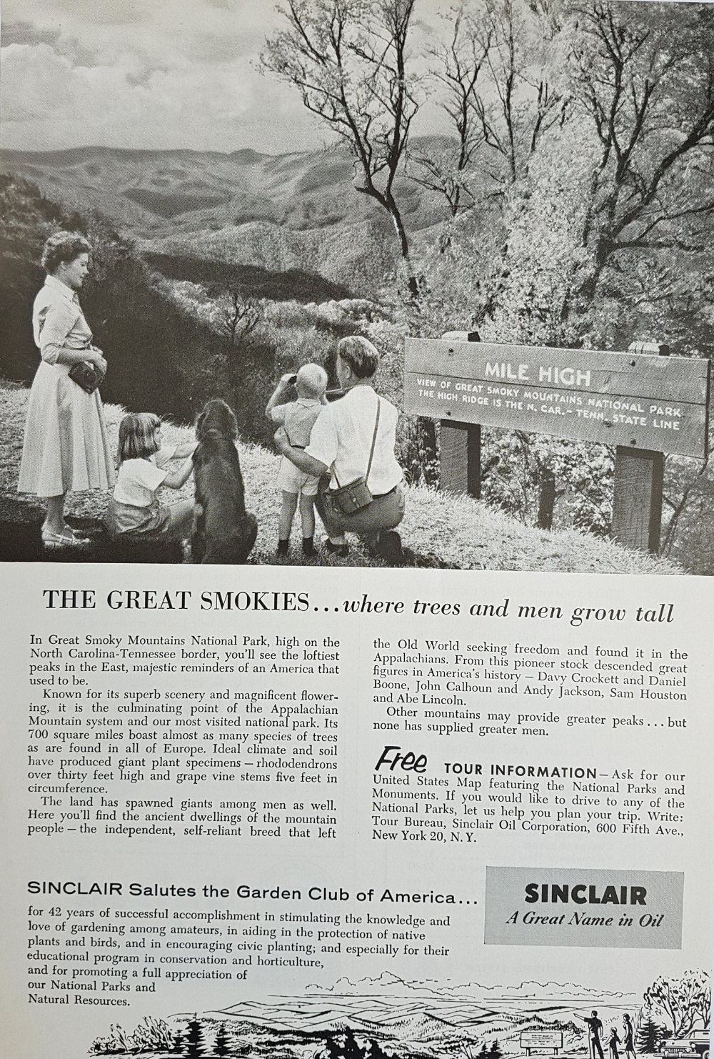 1955 Sinclair Oil Corporation Ad Original Magazine Ad Retro Ad The Greatest Smokies Where Trees And Men Grow Tall Magazine Ads How To Grow Taller Retro Ads