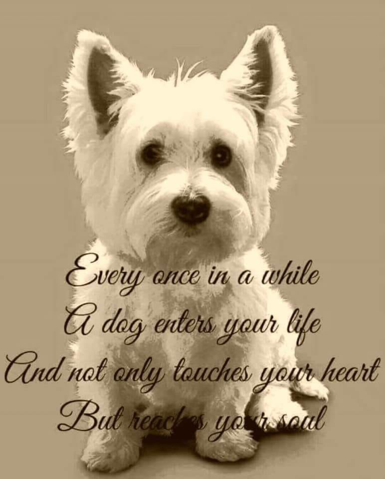 Cutepuppysayings Westie Dogs Dog Lover Quotes Dog Lovers Funny