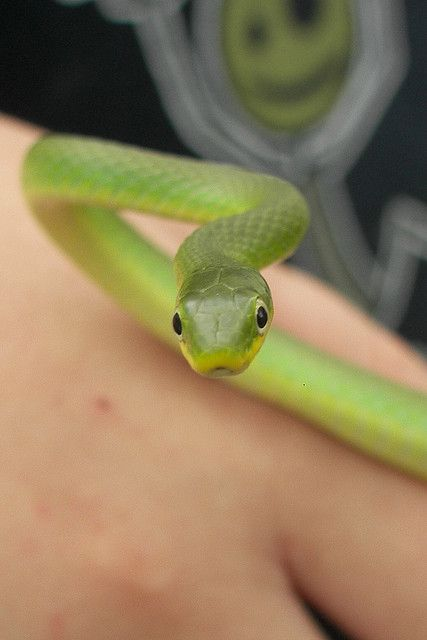 Green Garden Snake by MzScarlett, via Flickr