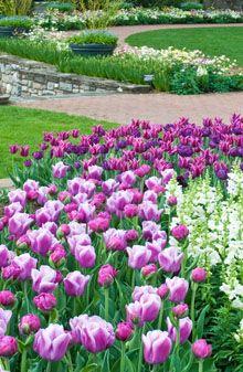 36d4e4a9887f0c4e26c81c2f6c670387 - How Much Is A Longwood Gardens Membership