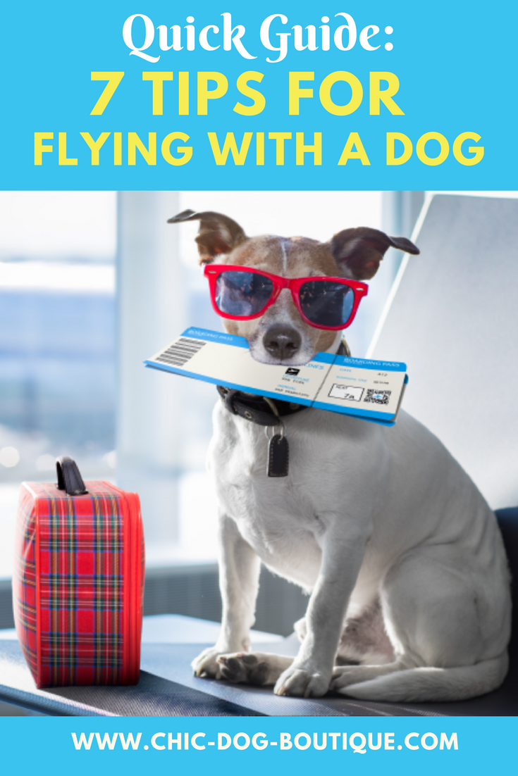 7 Tips for Traveling with Your Pets foto