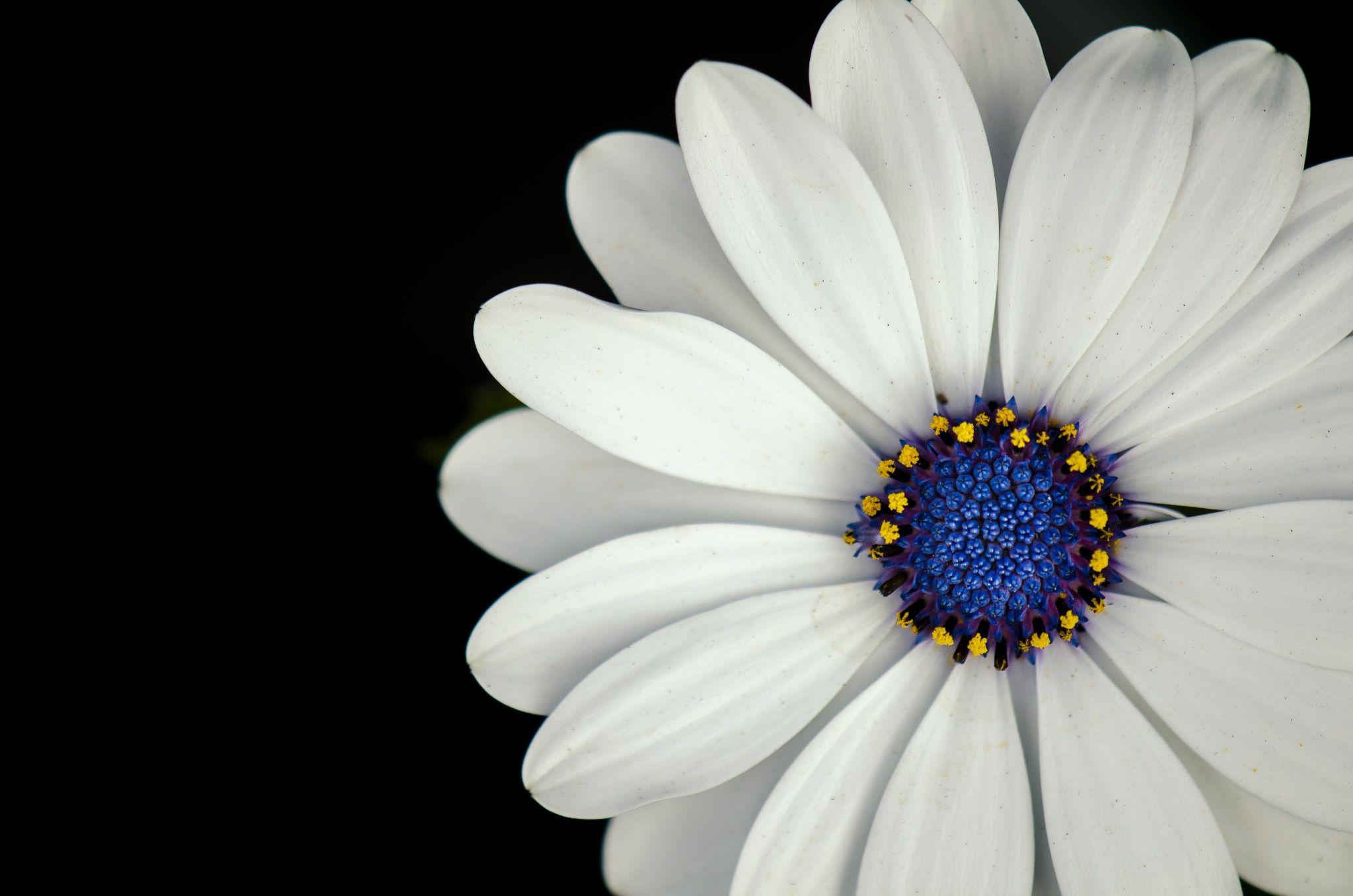 White flower with blue center david mccurry 500px photography white flower with blue center david mccurry 500px izmirmasajfo