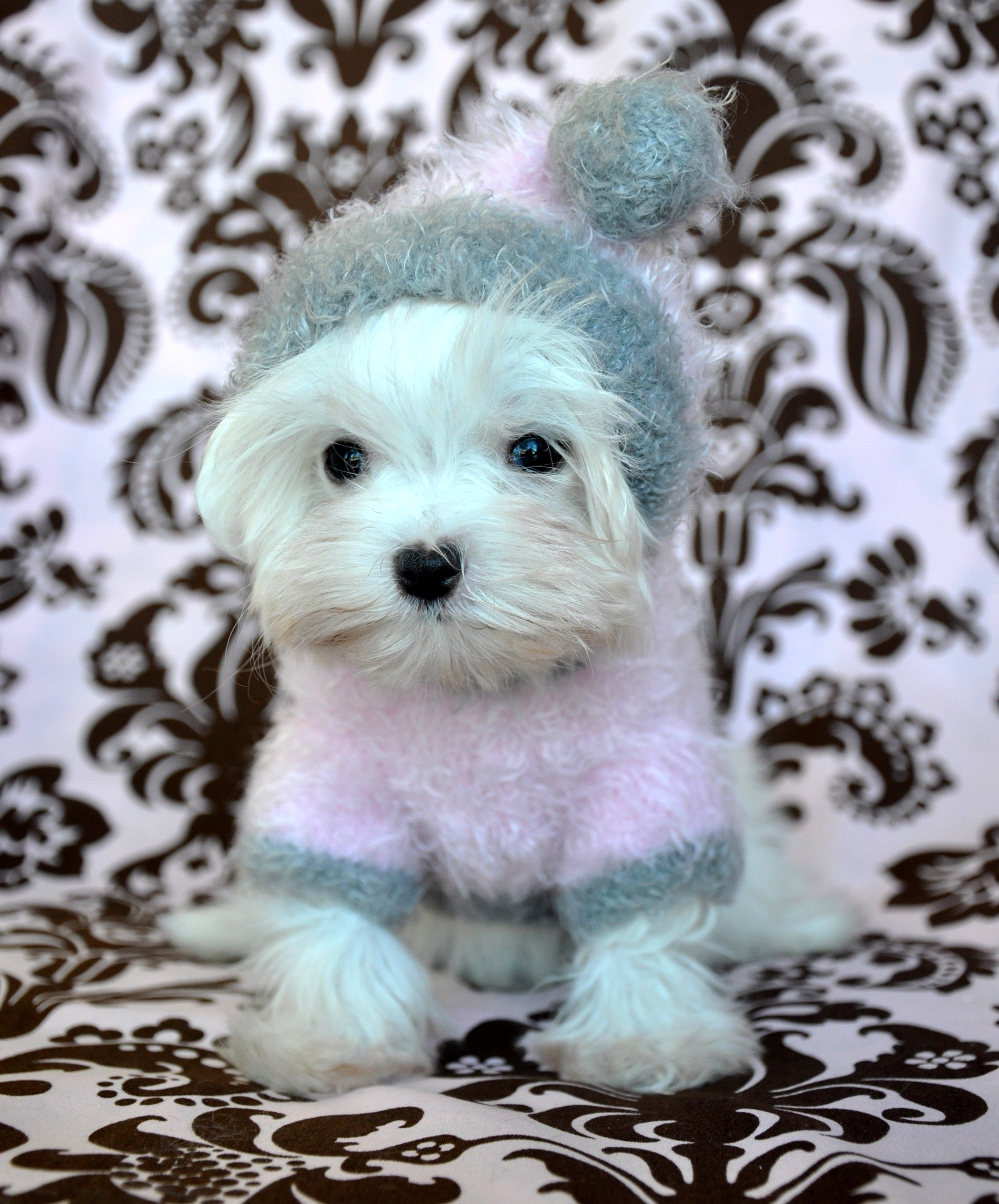 Great Pets Products And Children S Clothes On One Site Maltese