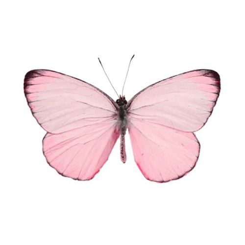 Why Isnt There A Butterfly Emoji Pink Butterfly Pink Heart Pretty In Pink