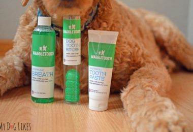Staying on top of Dental Health with the Waggletooth Dog Toothbrush #dentalcare