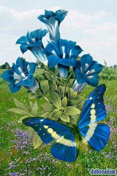 ƹ̵̡ӝ̵̨̄ʒ ✿ Brianna loved blue and especially blue butterfliesxox ƹ̵̡ӝ̵̨̄ʒ ✿ *