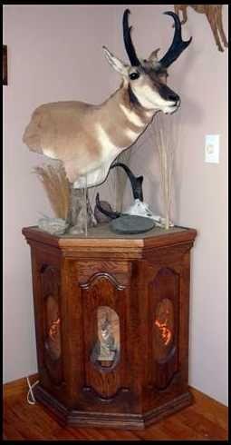 Pronghorn Pedestal Mount Taxidermy Taxidermy Display