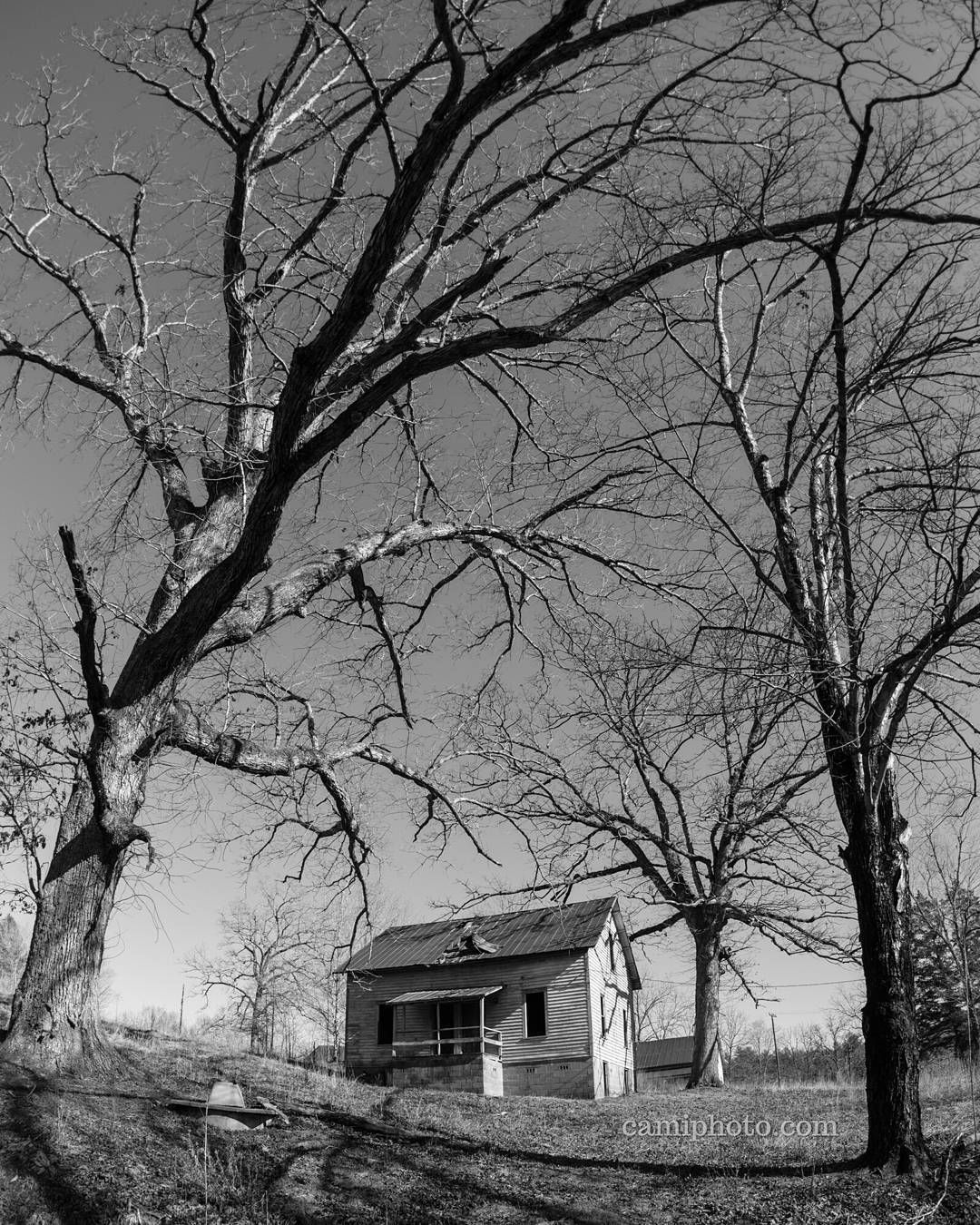 Gnarly Old Trees Surrounding Abandoned Houses At Henry