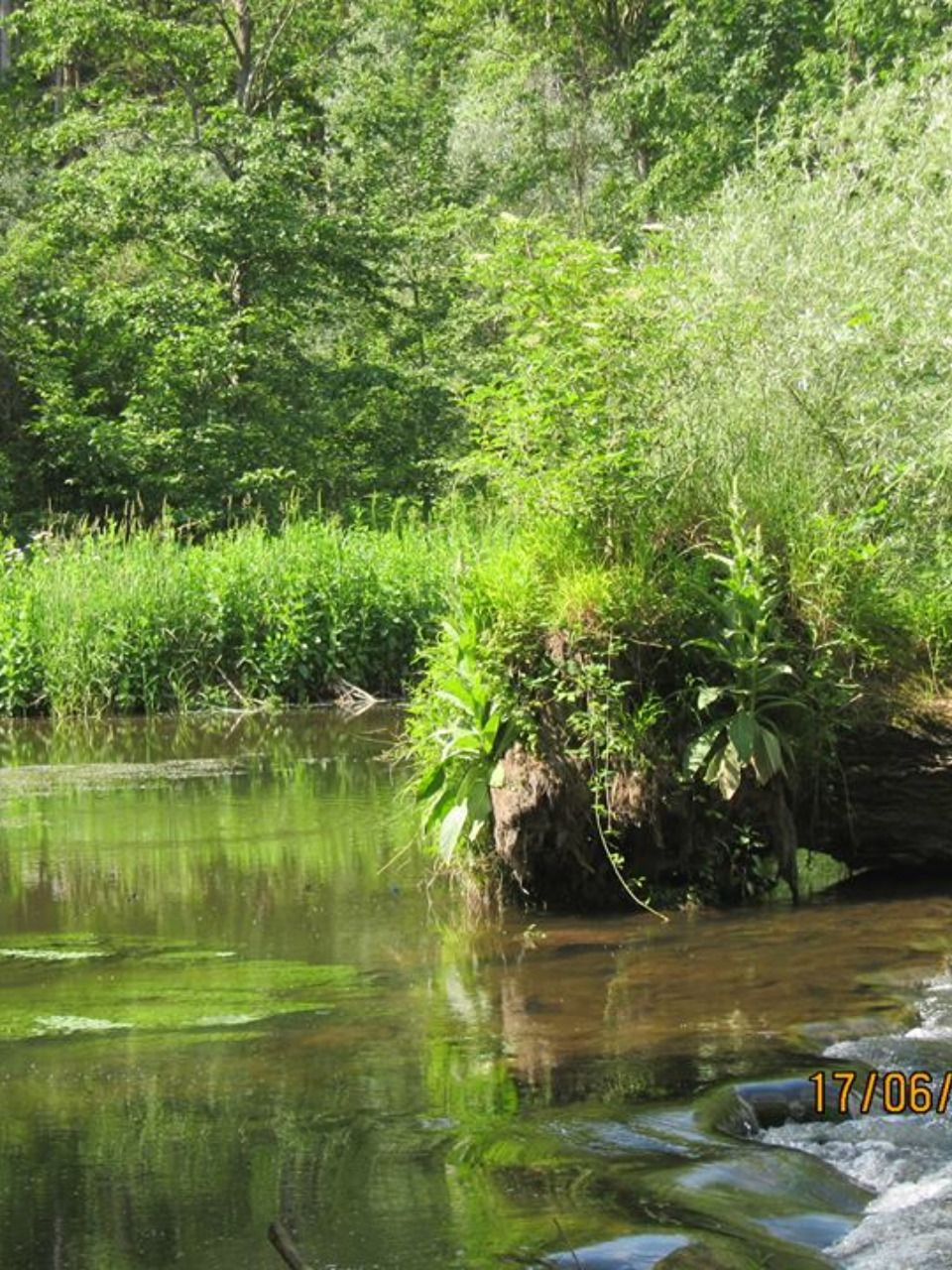 This Is A Small Paradise For Dragonflies And Ducks On The Isar Near Freising Inspiring My Doll Making Fairies And Elves Dawanda