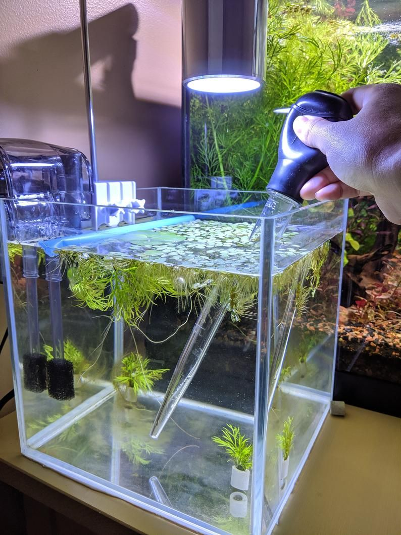 how to change fish tank water easily