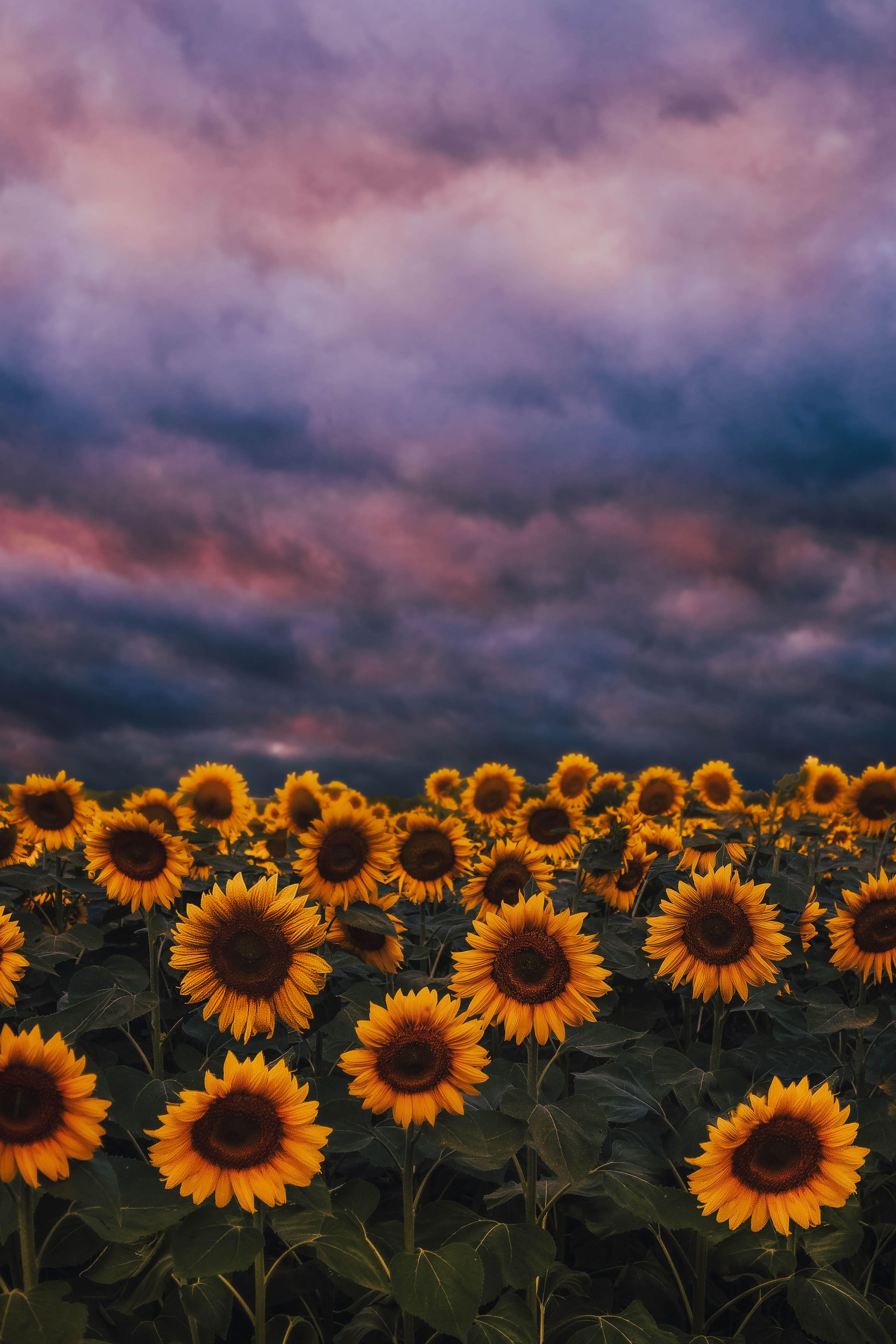 Wallpaper Aesthetic Sunflower Wallpaper Beautiful Photos Of Nature Nature Photography