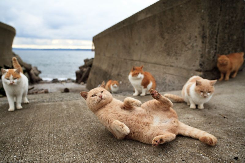 Fubirai, Japanese blogger, has captured wonderful portraits of cats' life by the sea.