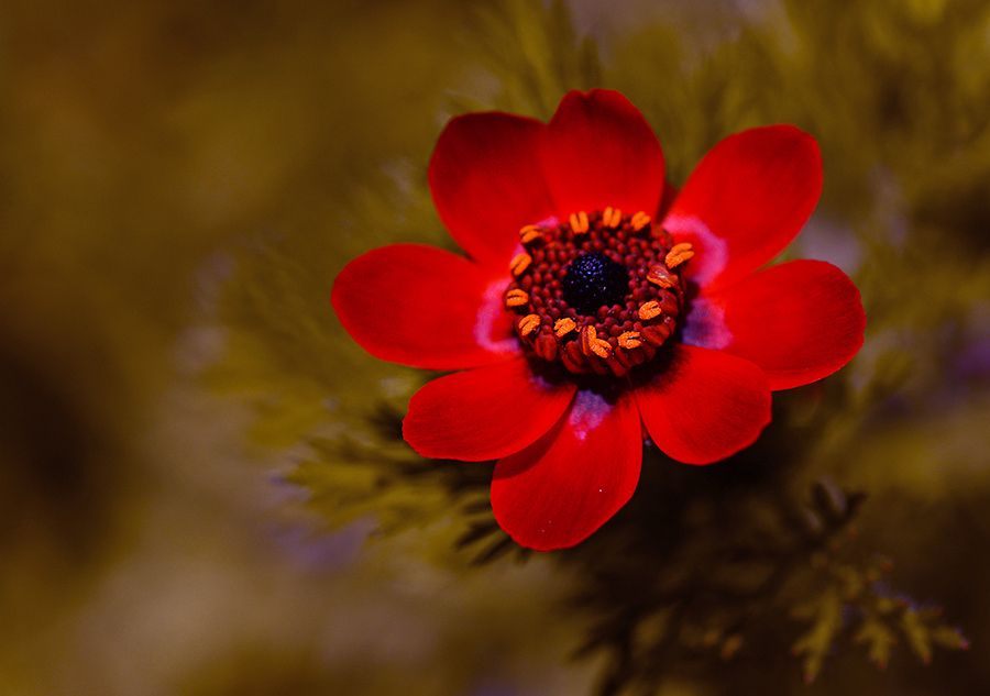 Photograph wild red by yasin mortaş on 500px