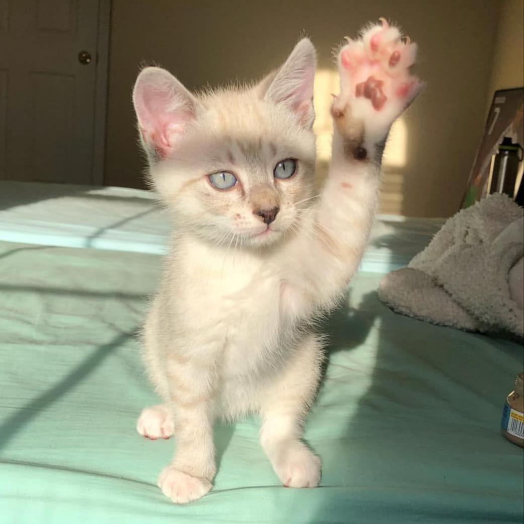 High Five In 2020 Funny Cat Videos Cat Gif Cat Photo