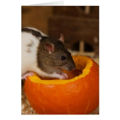 Scary Halloween Rat