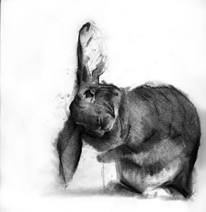 benjamin björklund charcoal rabbit art pinterest rabbit