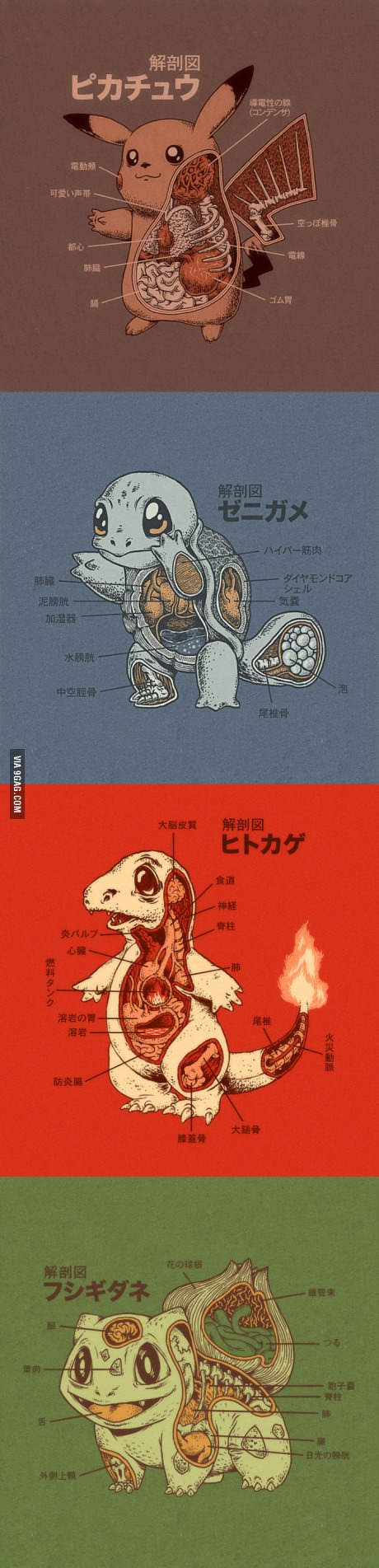 Pokemon Anatomy on 9GAG