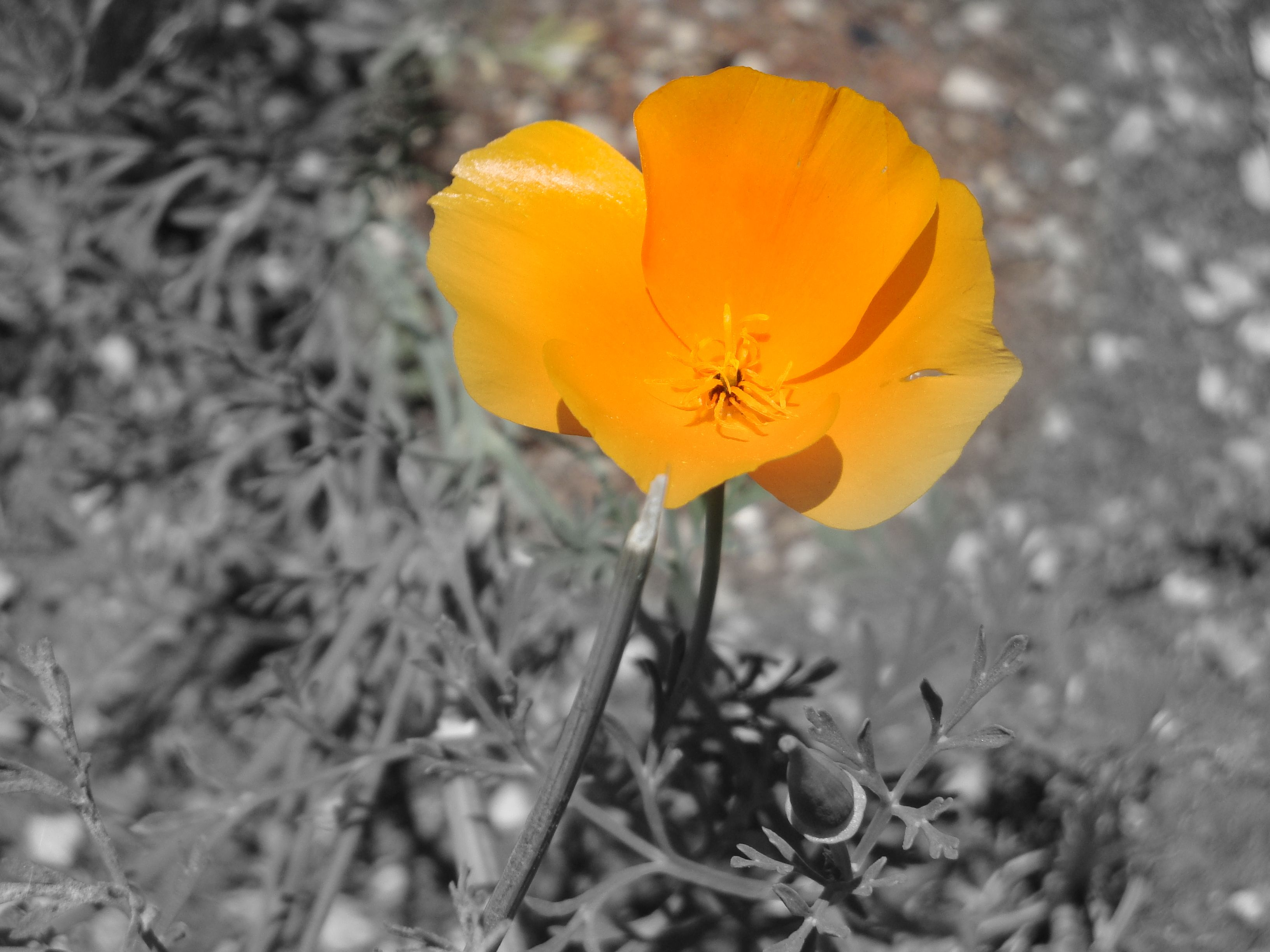 Just One Flowerorangegrey The Colors Of Nature Pinterest
