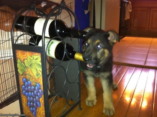 already trainning puppy to get you some wine....