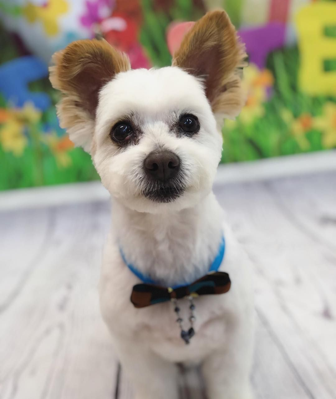 Dog grooming service in west Melbourne Price starts from