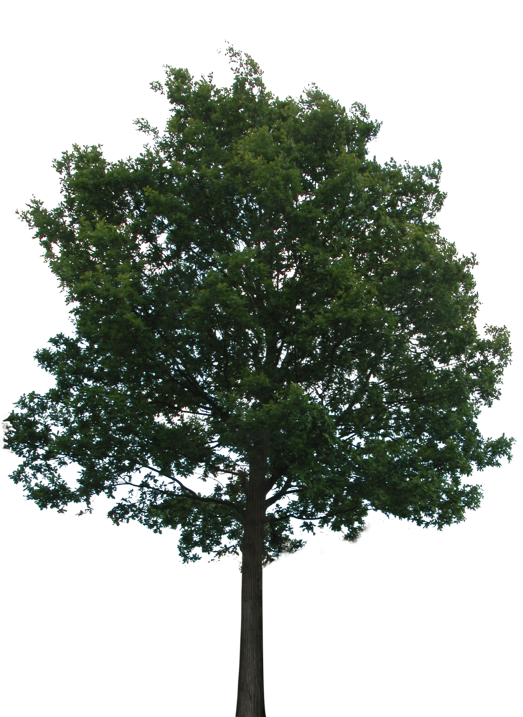 Tree 1 (PNG with transparency) by bupaje on DeviantArt