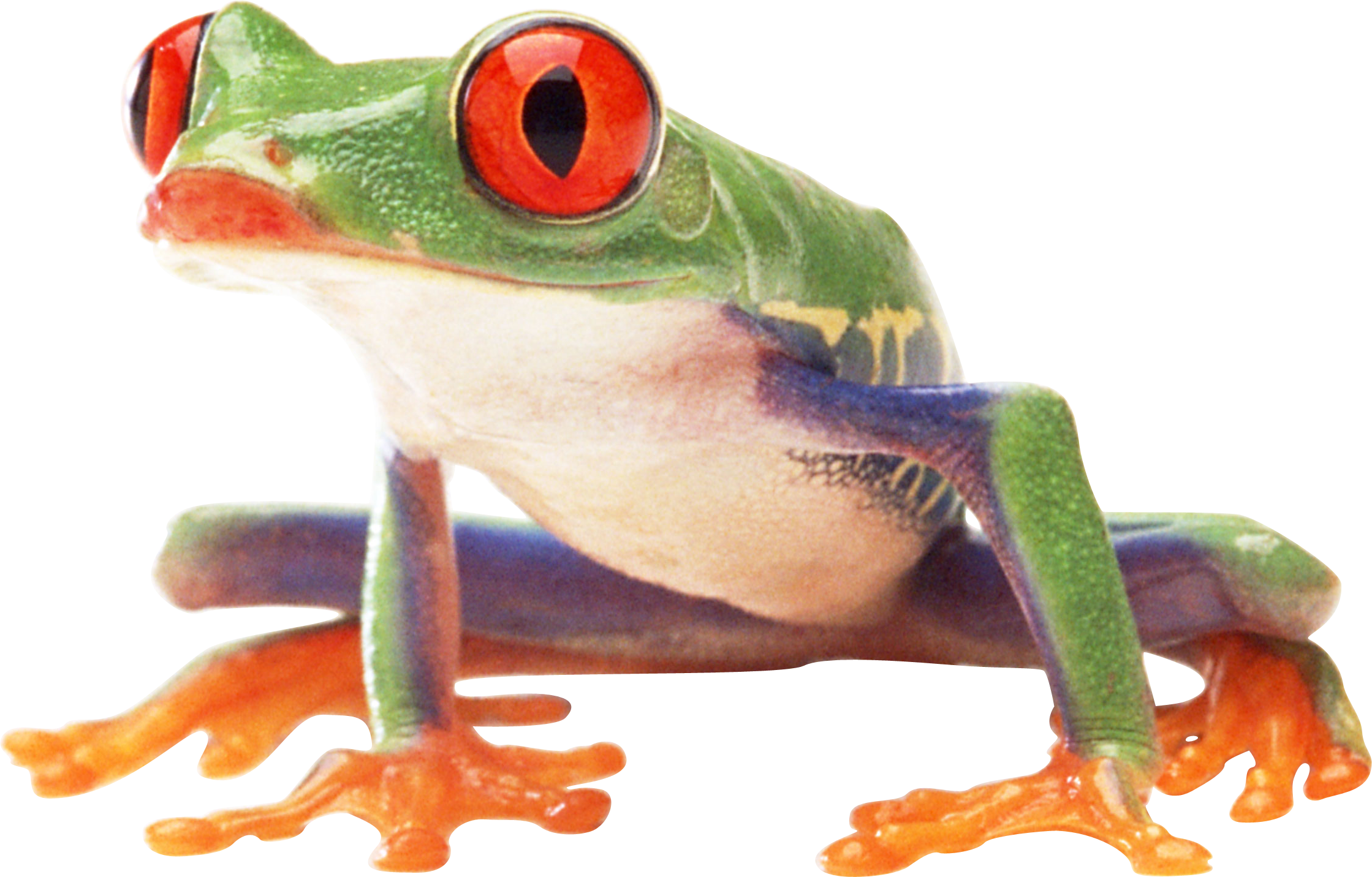 frog PNG image image with transparent background (With