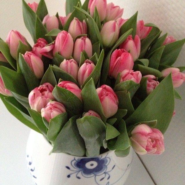 God weekend! ☀#forår #fredag #weekend #spring #springtime #sol #solskin #sunshine #dagihaven #garden #gardenday #dayoff #blomster #tulipaner #beautiful #pink #tulips #royalcopenhagen #godthumør #haveaniceweekend #marts #copenhagen #dk @royal Copenhagen #nofilter