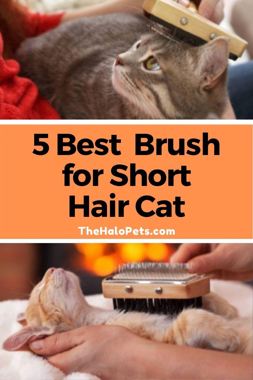 Best Brush For Short Hair Cat In 2020 Short Hair Cats Best Brushes Short Hair Styles