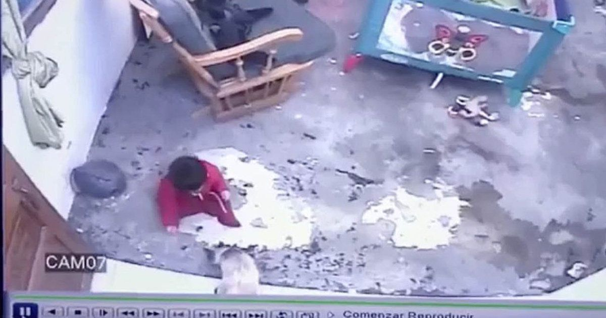 Cat Uses Its Paws To Save Toddler From Falling Down The
