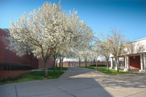 Woodcreek High School Is In West Roseville Ca And Is One Of The Many Great High Schools In The Roseville Joint Unified Sc School District Roseville High School
