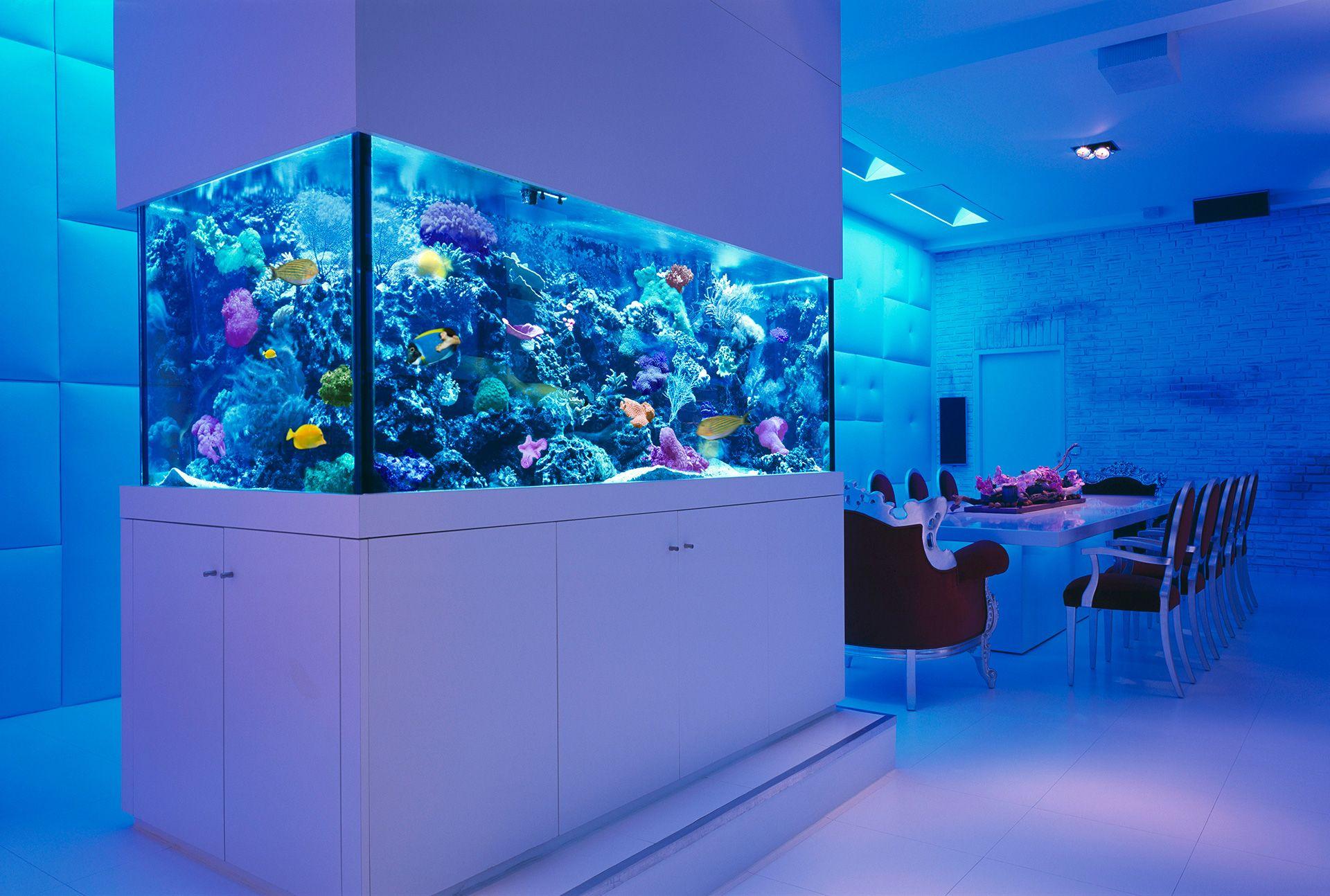 36ddc71a20684b5766102327f858e6e9 Frais De Aquarium Rond Conception