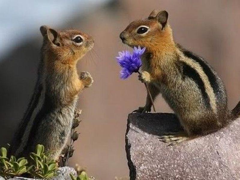 Tierisch Blumige Aussichten Bald Kommt Der Fruhling Seite 1 Tiere Niedliche Tiere Susse Tiere