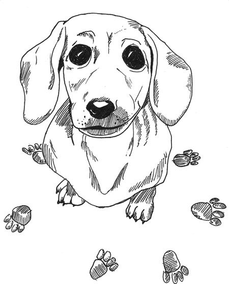Sweet Sausage Dachshund Colors Dog Coloring Page Animal Coloring Pages