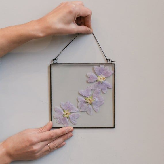 Dried pressed spring plants, botanical glass wall hanging, square floating frame, real Mallow flower