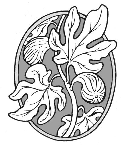 Fig drawing google search tattooed pinterest trees for Fig tree tattoo