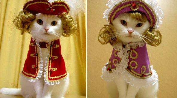 Animal · Cats Dressed Up In Costumes ... & Cats Dressed Up In Costumes For Halloween | FUZZY LUV | Pinterest ...