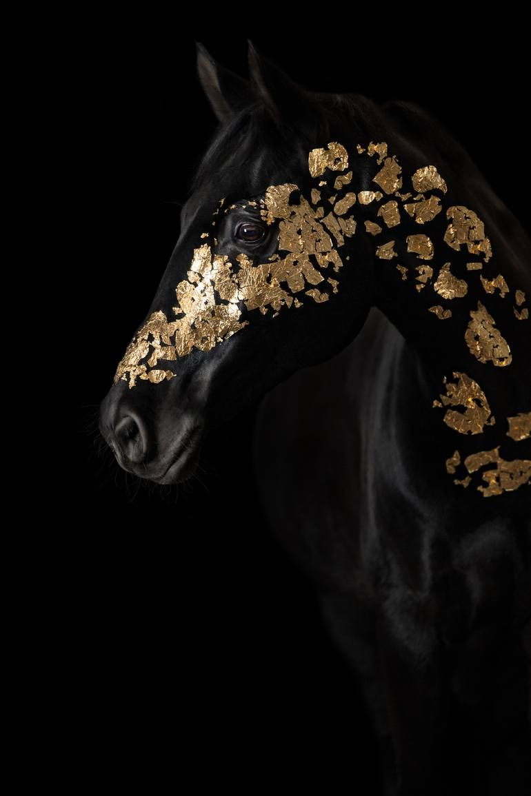 Original Horse Photography by Diana Wahl | Fine Art Art on Paper | Gold Horse - Limited Edition 1 of 15