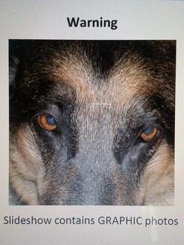Patty, victim of animal cruelty