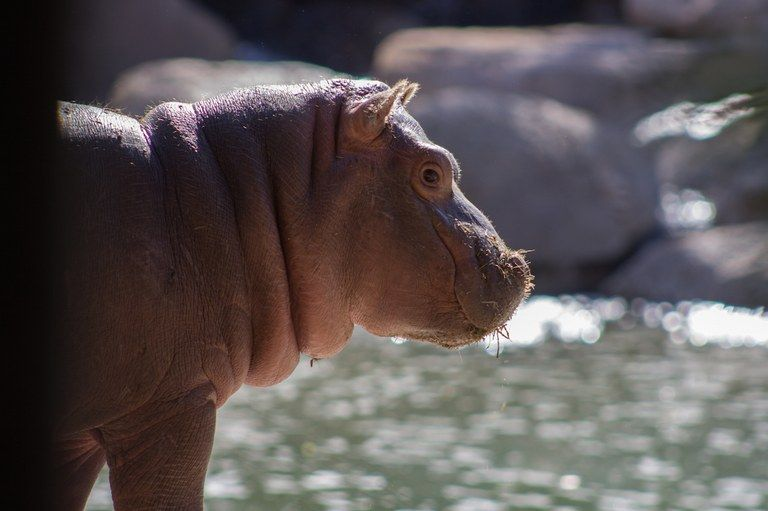Pin by rachel hamby on new mexico zoo botanical