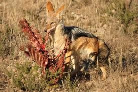 Image Result For Wild Animals In South Africa Animals Africa