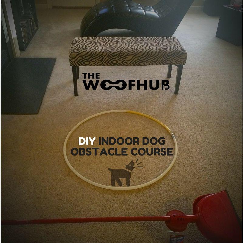 Diy indoor dog obstacle course indoor dog diy dog stuff