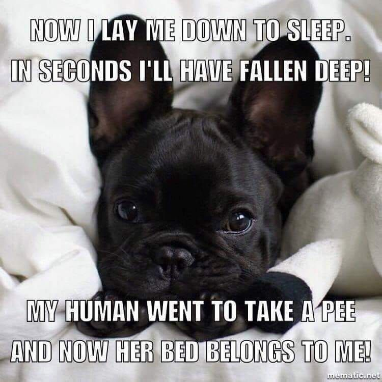 36e0ea81c6c72674e2033305a820228b - How Do I Get My Puppy To Sleep In His Bed
