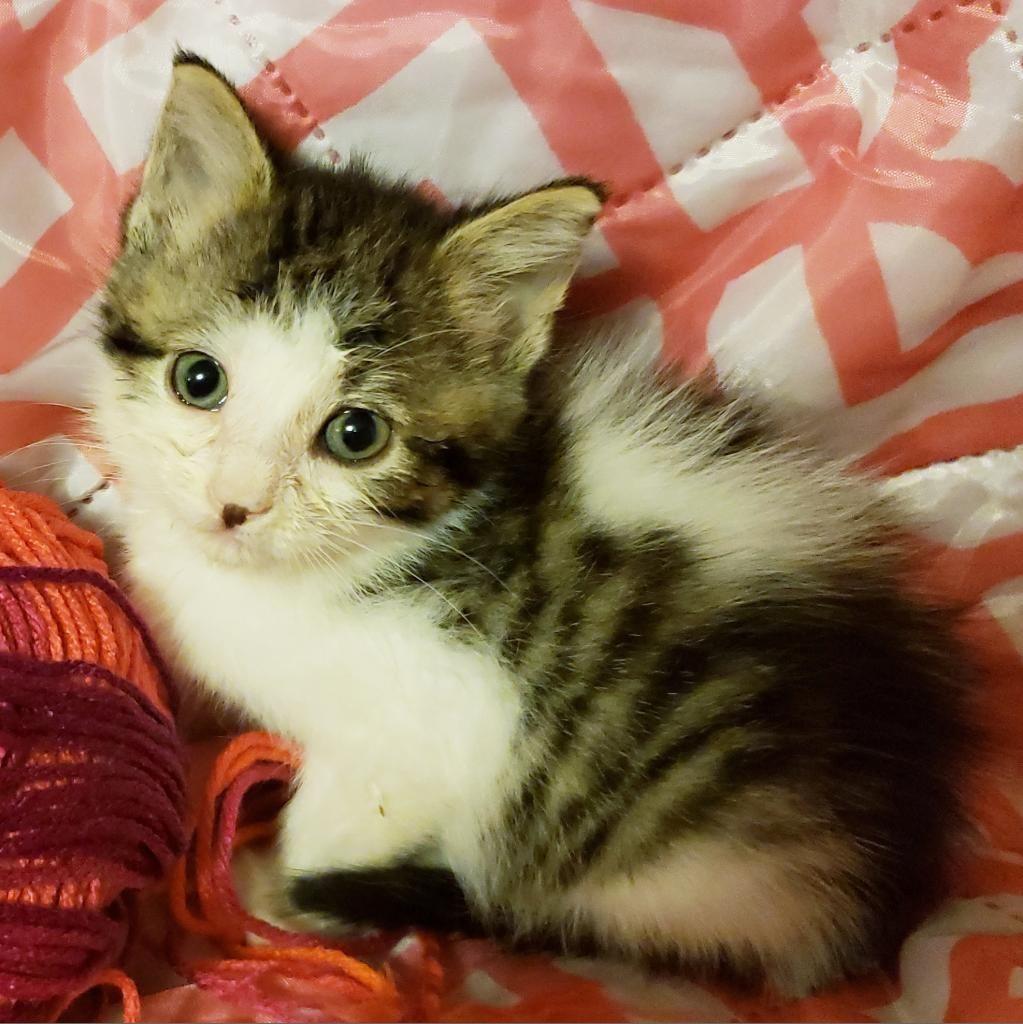 Adopt Luna on Animal action, Pet adoption, Pets