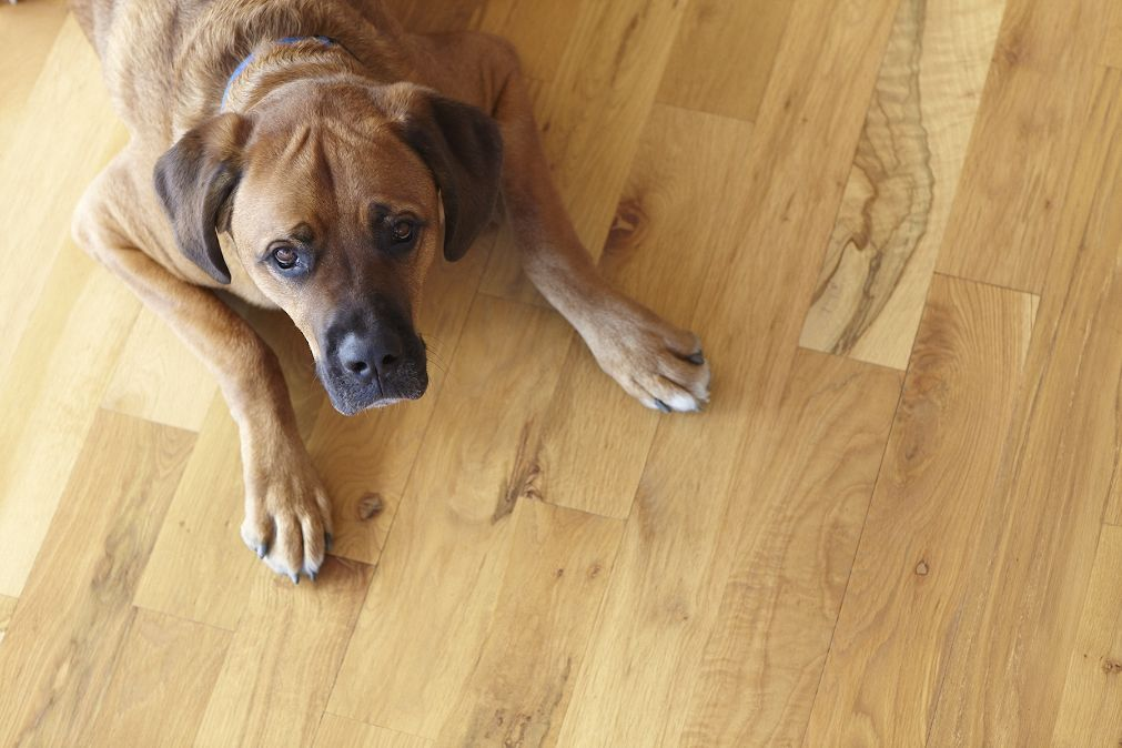 how to keep dogs nails from scratching hardwood floors | carpet awsa