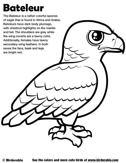Birdorable Bateleur Coloring Page Coloring Pages Color Pattern