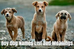 Female Dog Names And Meanings Boy Dog Names Dog Names Boy Dog