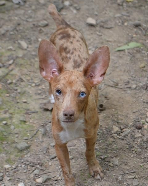 Adopt Westinghouse On Animal Rescue Animals Pets