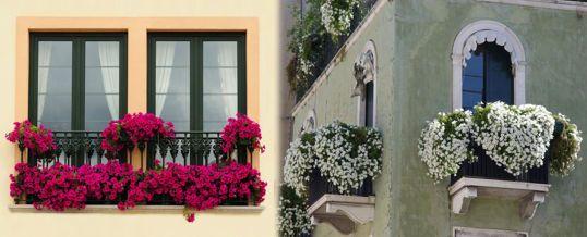 Mejores plantas para armar un jard n en un balc 538 for Plantas para balcones