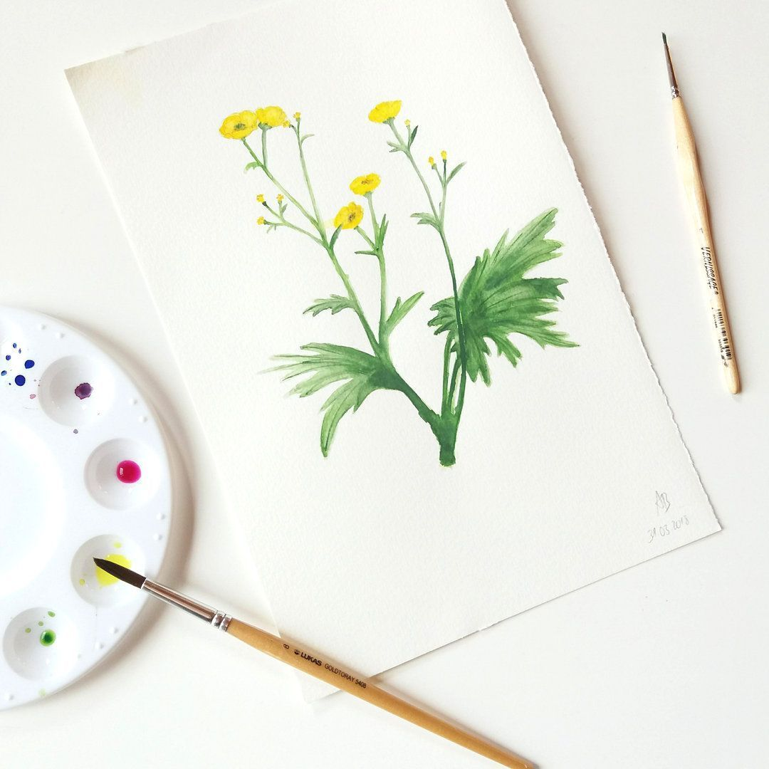 Andbuttercups Butterblume Illustration Postkarte Vintage