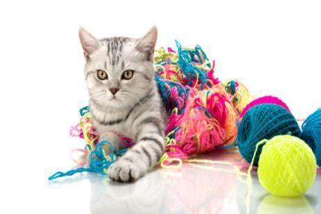 Como educar a tu gato - Los gatos mas tiernos y lindos Los gatos mas tiernos y lindos